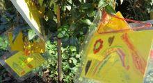 Der Friedhof: Ein grüner Spielplatz für Kinder