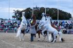 Equitana - Sensationeller Veranstaltungsstart auf dem Maimarktgelände