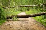 """Sturmtief """"Burglind"""": Betreten von Wäldern in Mannheim gefährlich"""