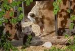 Zoo Heidelberg: Martins Vermächtnis ist pelzig und noch klein